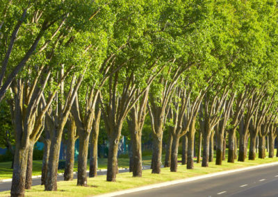 Tree-lined-road-at-napa-valley-corporate-drive